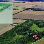 Naturplant-Skovrejsning10år_skitse-e1479731967151