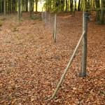 160 cm hegn med trykimprægneret fyr