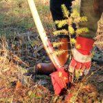 Plantevalg i skov