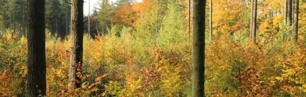 tilskudsmuligheder til skov