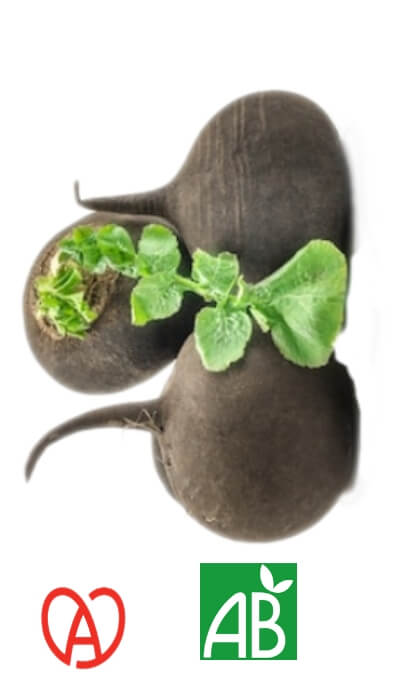 Radis Noir Rond Bio made in Alsace