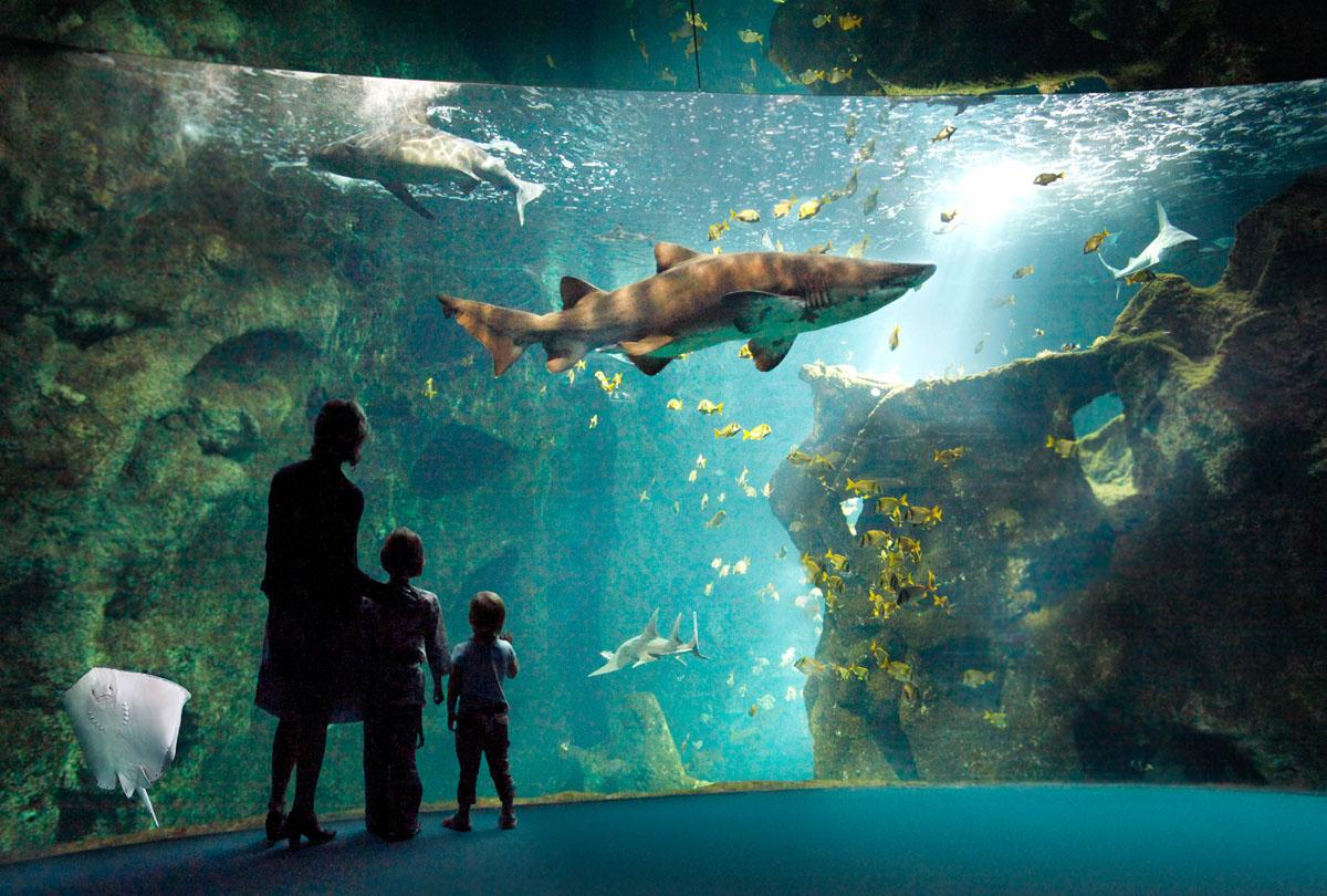 Aquarium La Rochelle A La Une Zoo Amp Aquarium En