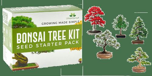 Regala a un arquitecto este kit para que plante sus propios bonsáis
