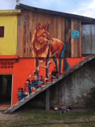 Coyote Bejuco