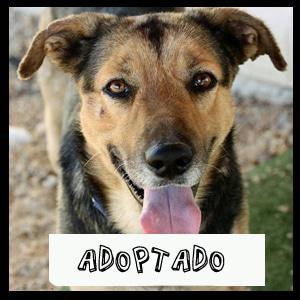 Bram-perro-adoptado
