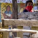 Un caracol que combate el sistema mexicano