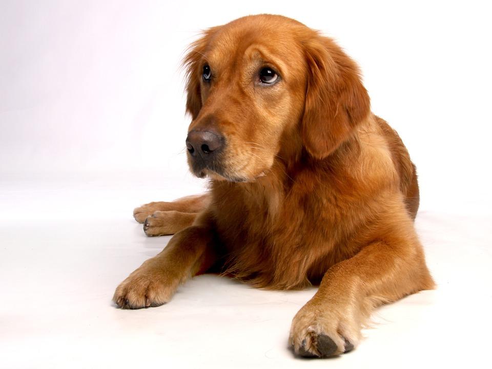 Com triar el pinso pel meu gos