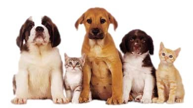 botiga per animals