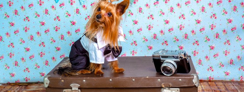 Viatjar amb Gossos - Consells i Recomanacions
