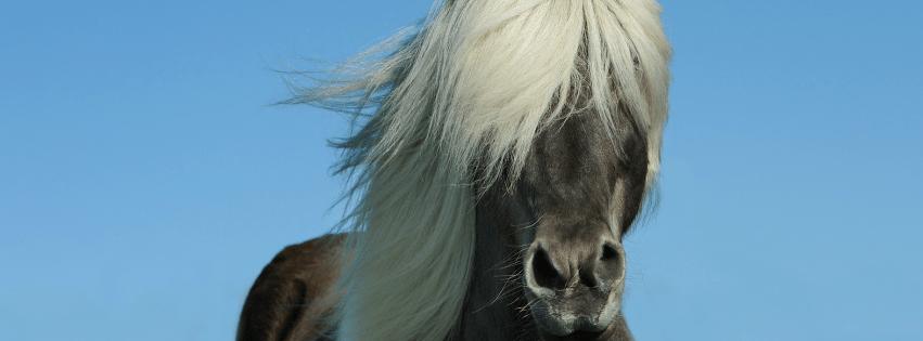 Botiga de Pinso per Cavalls