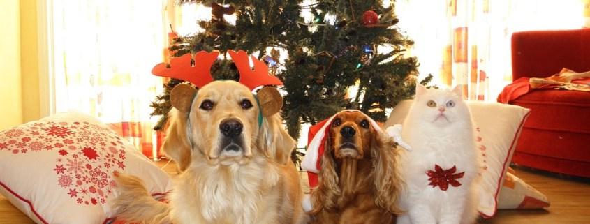 Cuidar de les mascotes al nadal
