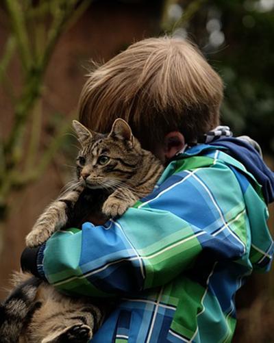 Assegurança de salut per gats i gossos