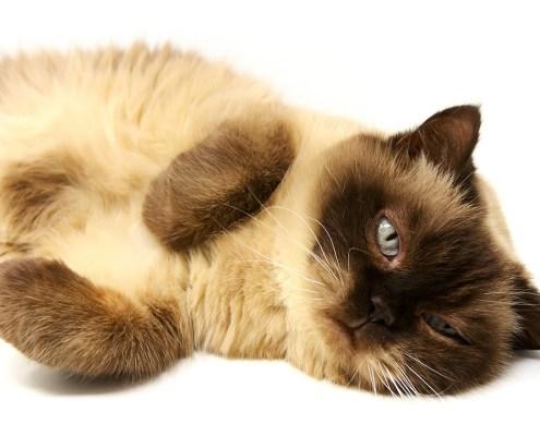 fonts per a gats