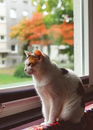 gats i altres mascotes a la tardor