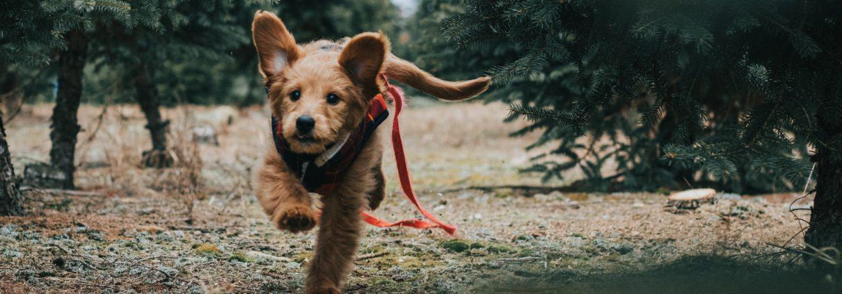 perro huyendo