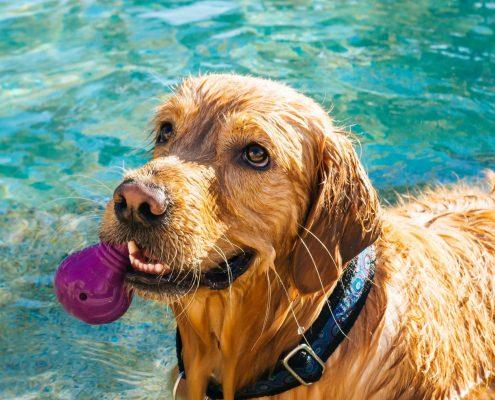 perro jugando en piscina