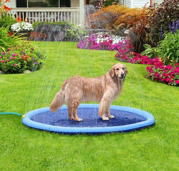 juguete perros verano