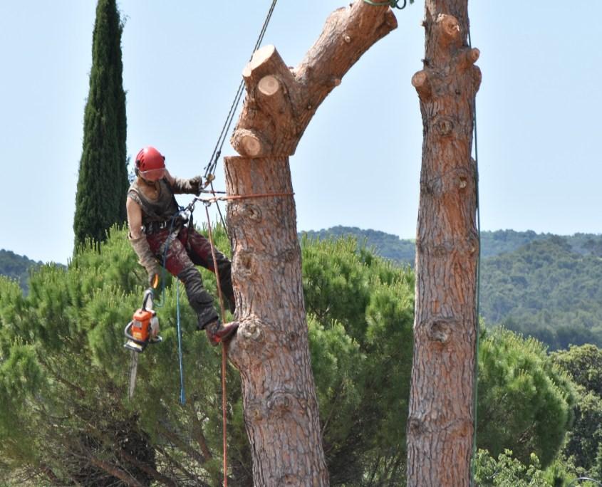 poda y tala árbol