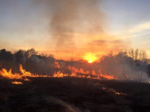 Prescribed fire is an important tool for enabling native prairie species to compete with non-native plants, and preventing woody vegetation from encroaching.