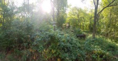 plus-size bulgaria vratsa forest hike