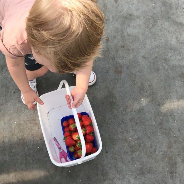 Kalter aardbeien