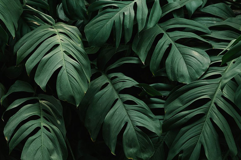 Rain Forest Desktop Presets 4594872 6