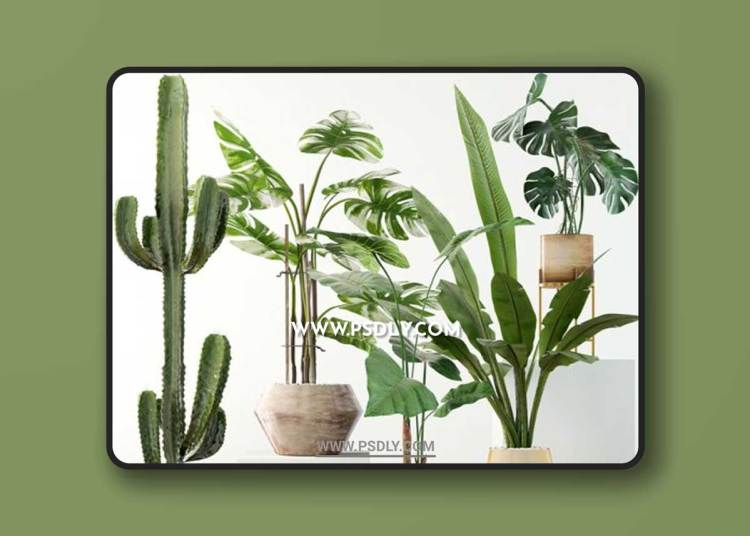 Plants collection 04 3D ModelsPlants collection 04 3D Models