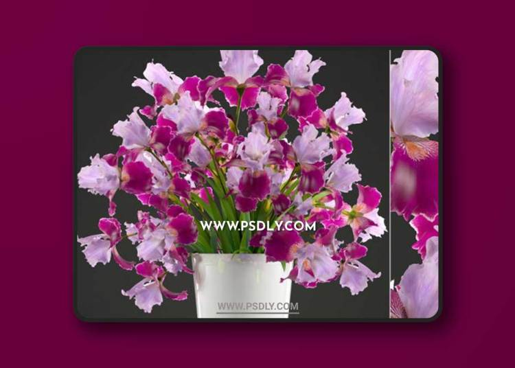 Collection of flowers 43. Iris 3D Models