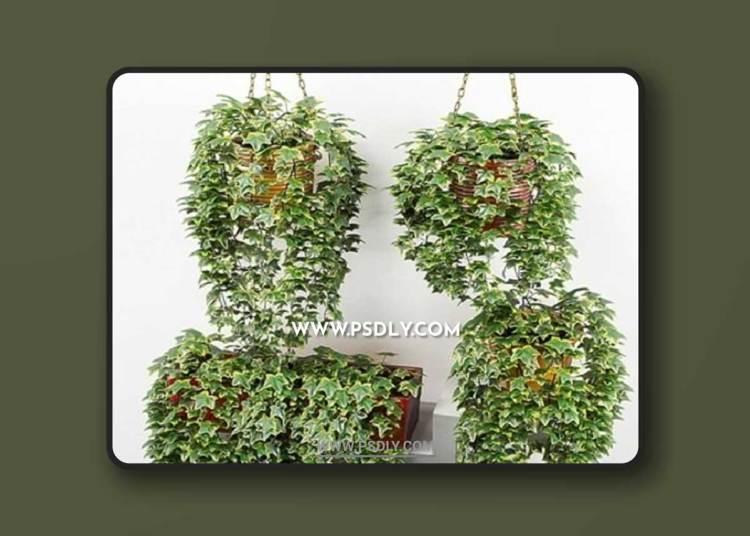 Ivy in pot 3D Models