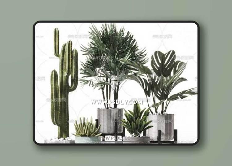Plants Collection 57 3D Models