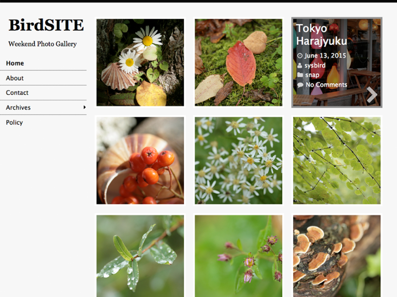 BirdSITE WordPress Photography Theme