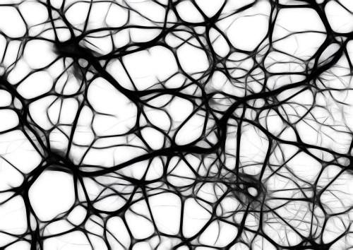 neuroscienza