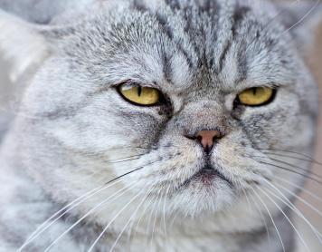 ¿Puede tu gato causar Alzheimer?