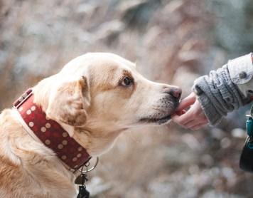 ¿Cómo funciona la terapia asistida con animales?