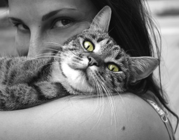 4 experimentos psicológicos que puedes hacer con tu gato