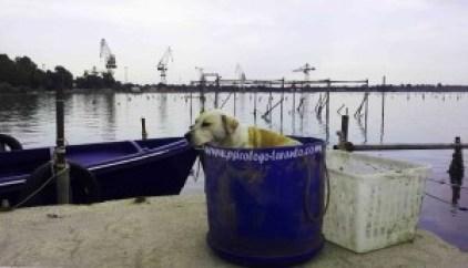 fiume galeso dog thinking zinzi