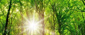 cropped-18456889-alberi-d-alto-fusto-natura-verde-legno-luce-solare-sfondi-Archivio-Fotografico.jpg