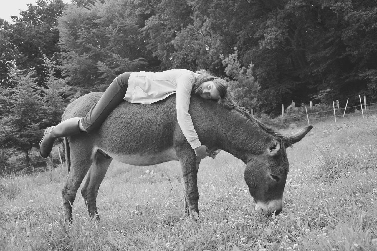 Onoterapia: un animale speciale fonte di benessere