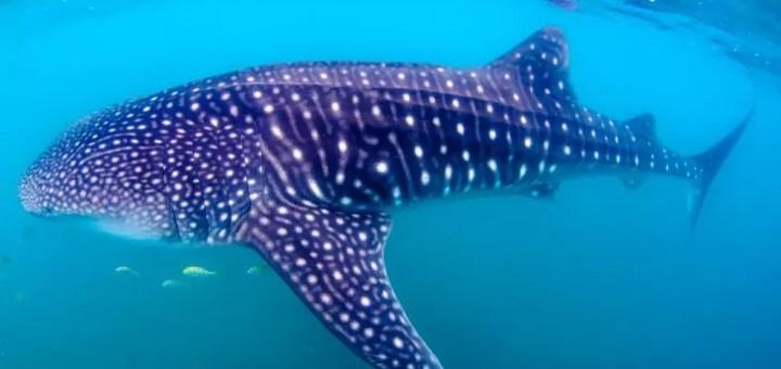 Dünya'nın En Büyük Balık Türleri