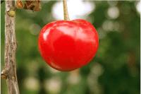 Healthy Fruits in Winter 9