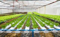Agriculture and Food Processing at Pentashiva Infraventures Pvt. Ltd