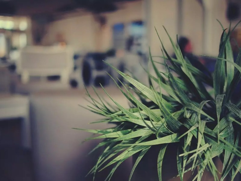 plant office