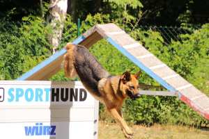 PSV Halle Hundesport (1)