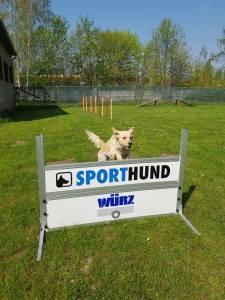 PSV Halle Hundesport 7 2