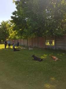PSV Halle Hundesport 9