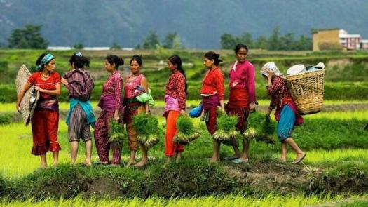 Nepalese have a social practice called 'mela' in farming where the members in a village are obliged to participate in plantation and harvest of the crops each other in turn wise.