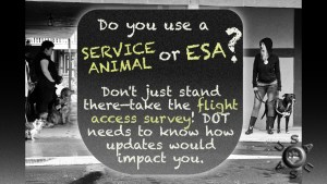 Graphic with text. Black and white picture of service dog teams looking at the text in the middle, USAUSA paw-button logo in bottom right. Text: Do you use a SERVICE ANIMAL or ESA? Don't just stand there—take the flight access survey! DOT needs to know how updates would impact you.