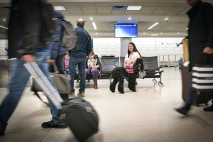 A service dog handler sits near baggage claim as her black poodle in pink vest looks at the camera through an opening in the luggage-toting crowd.