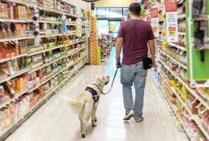 From behind, a white man in a t-shirt and jeans walks down a grocery store aisle with a cream Golden Retriever in a service dog vest.