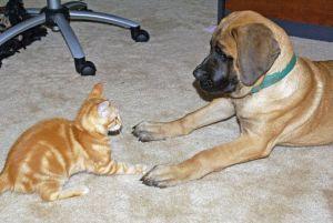 HRT cat v dog standoff